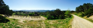 Looking down into Syrah, with Grenache on the right
