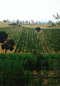 The steep slopes of Verna's Vineyard