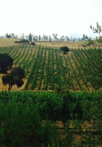 The steep slopes of Verna's Vineyard