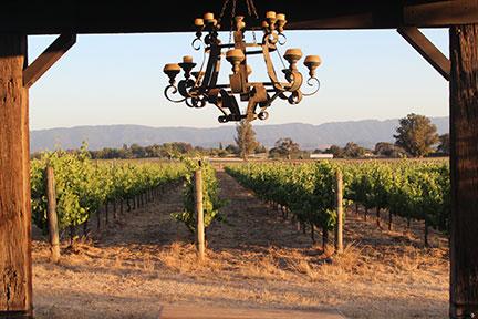 vineyard_web